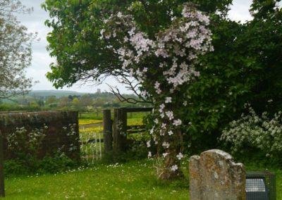 Living churchyard 4